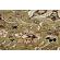 Paklājs STANDARD Topaz olive A 100€ Standard Classic kolekcija BCC SIA